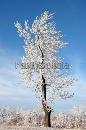 in coat of ice