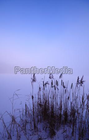 cattail, in, winter - 1673995