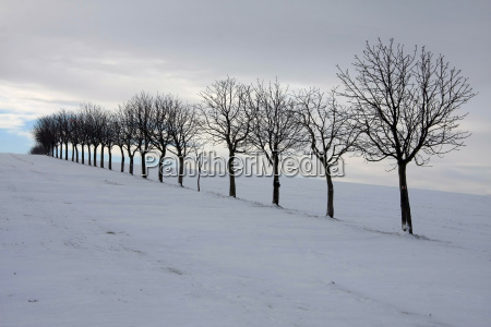 tree trees winter branches row a