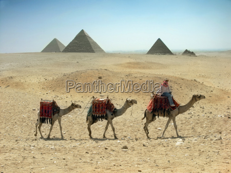 three camel caravan going through the