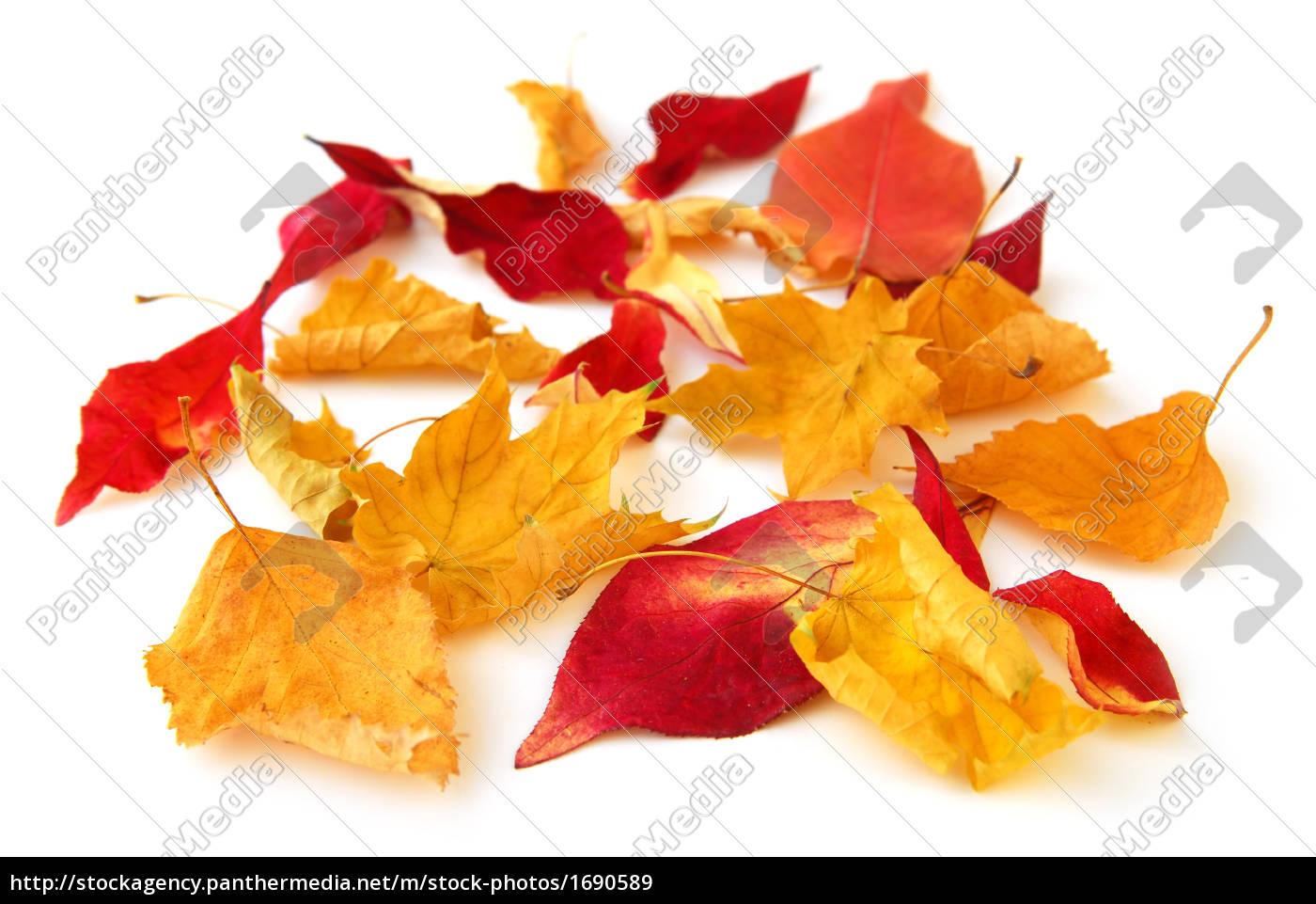 autumn, leaves - 1690589