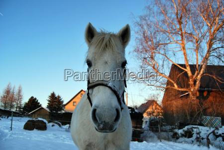horse animal mammal standing snow mold