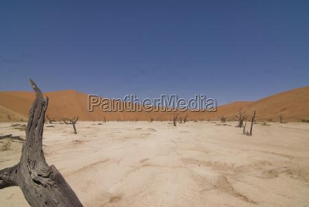 africa namibia deadvlei totholz sossusvlei park