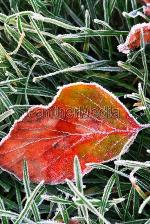 frosty, leaf - 1704061