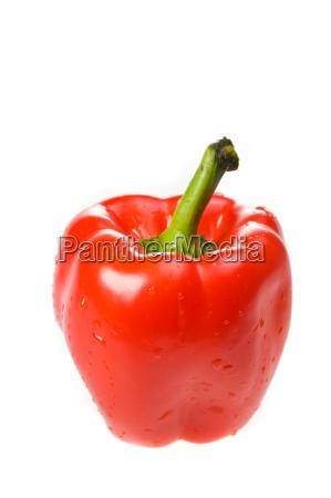 einzelne rote paprika