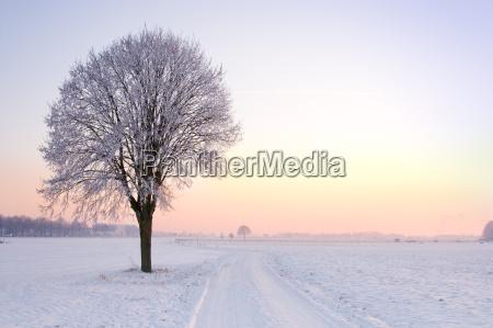 lone, standing, sunset, winter, tree - 1719459