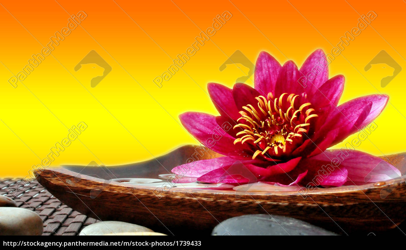 wellness, relaxation, water, lily - 1739433