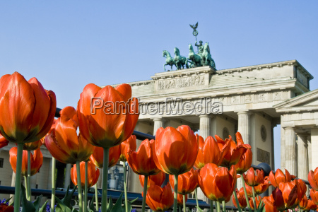 brandenburg gate with tulips