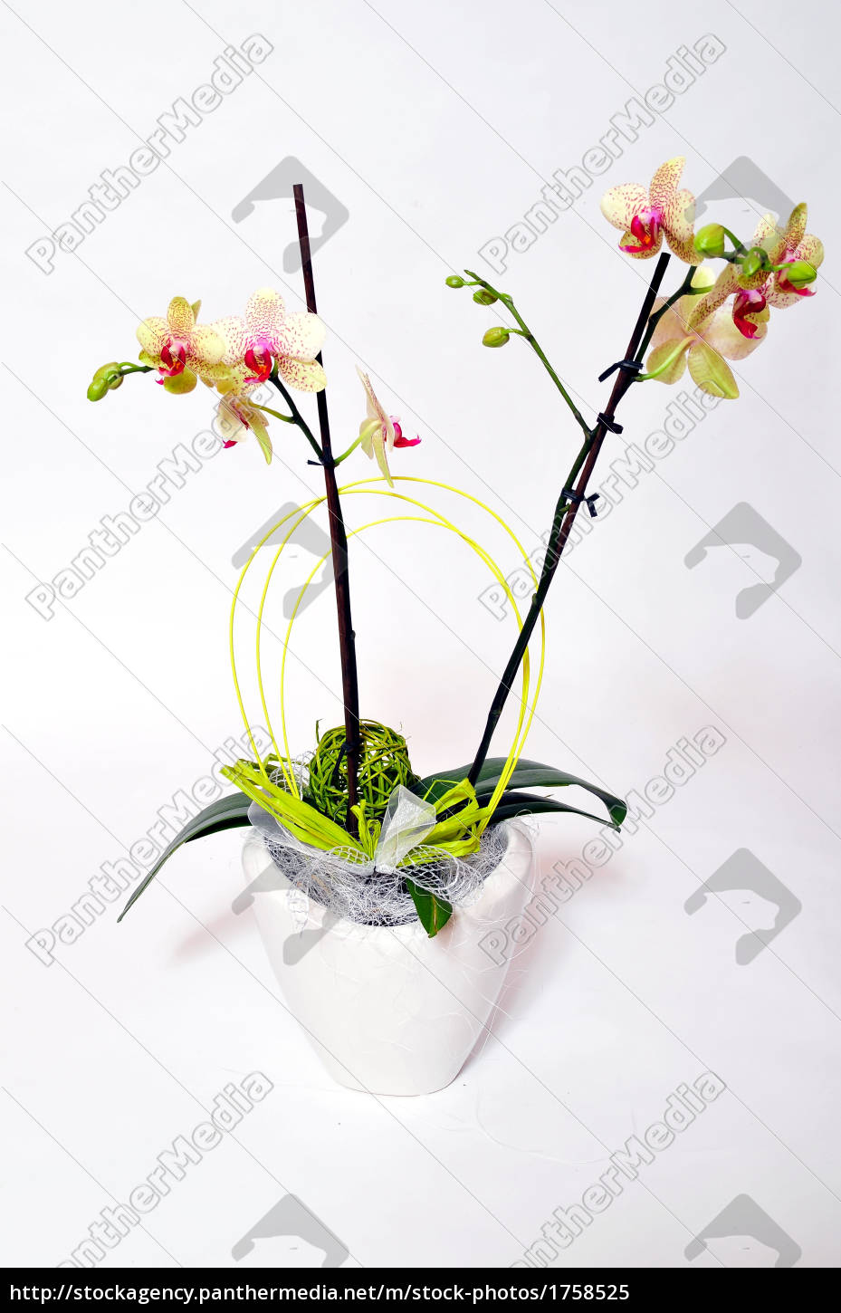 orchid, flowers - 1758525
