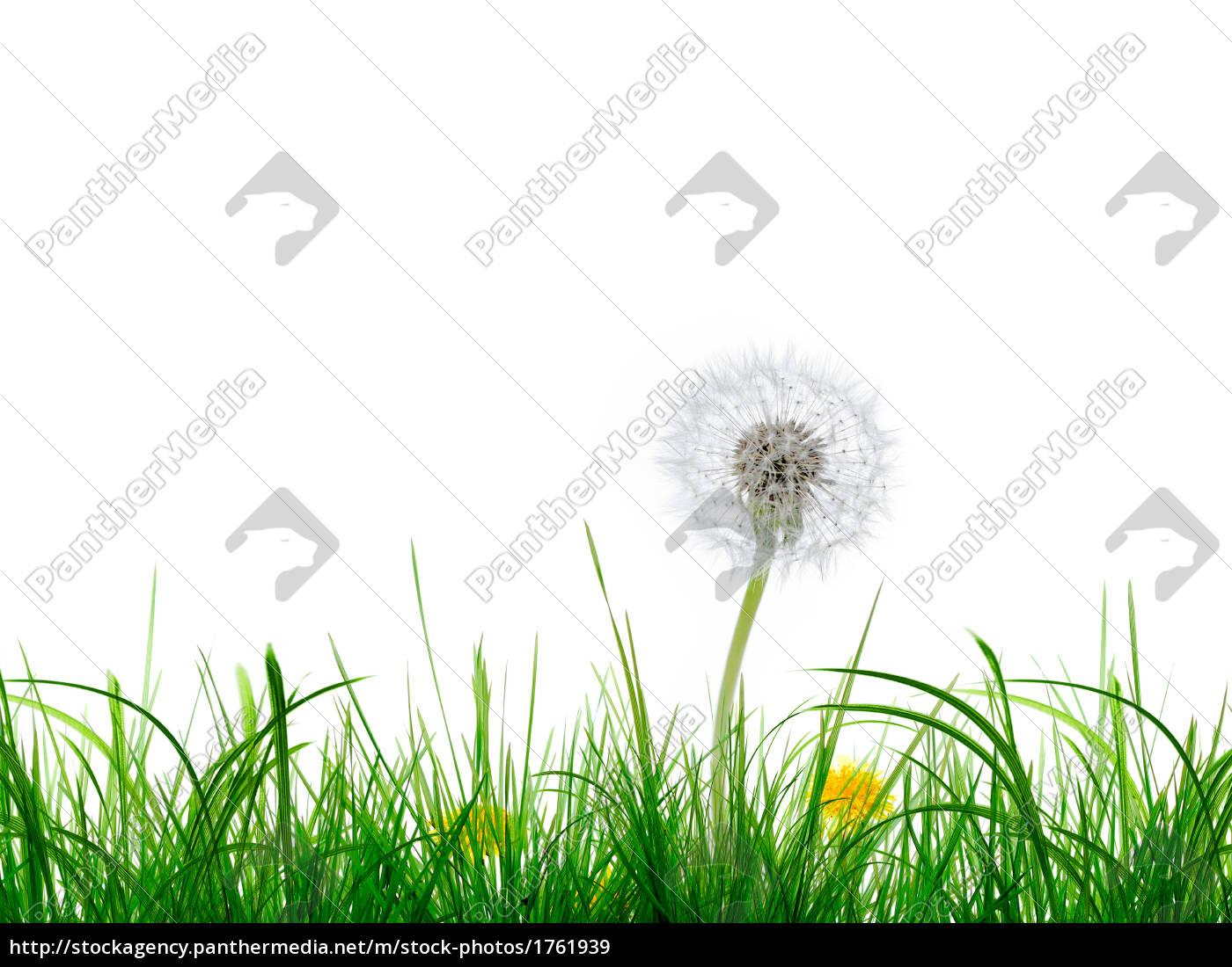 grass, and, flower - 1761939
