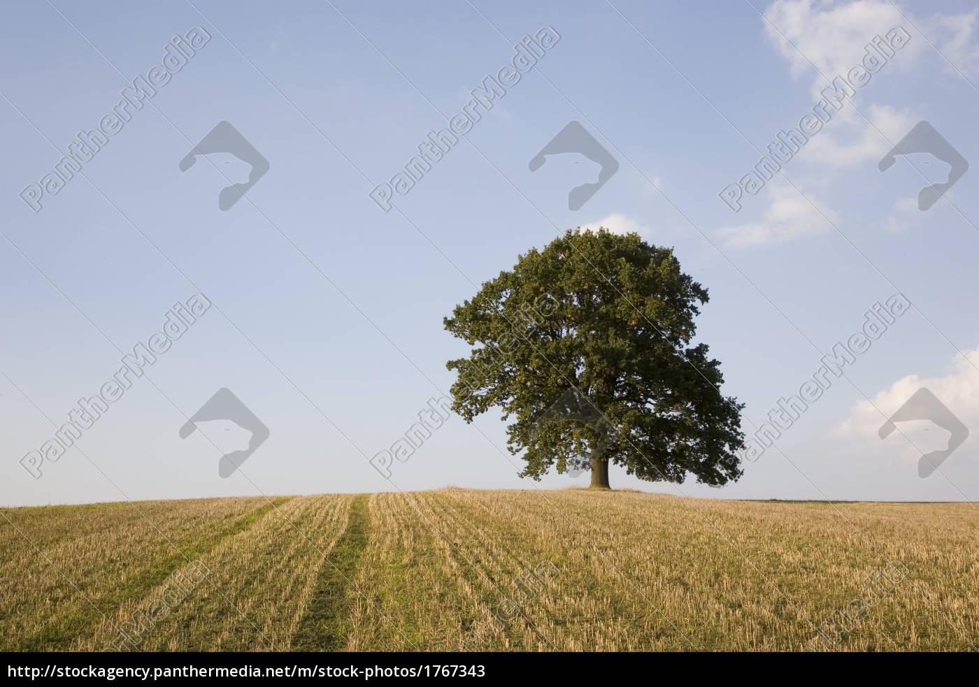 oak, tree, in, the, field - 1767343