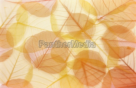 dry colored leaves background