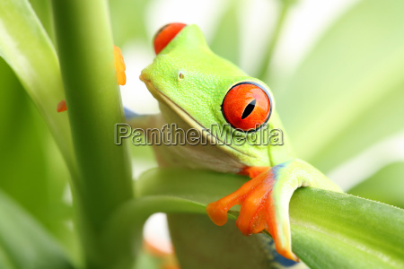 frog, in, a, plant - 1793565