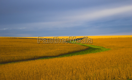 soybean, field, - 1794855