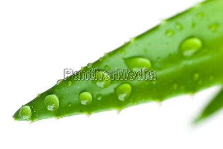 drops, with, aloe, vera - 1795367
