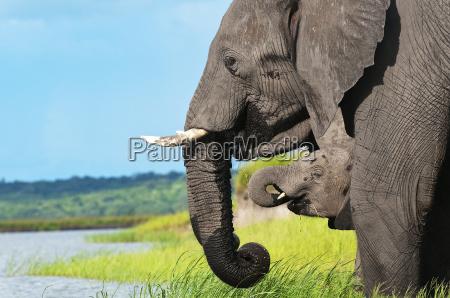 elephant family 01jpg