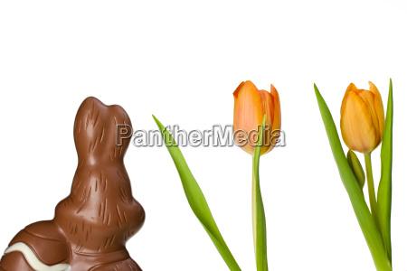schokoladen osterhase von hinten