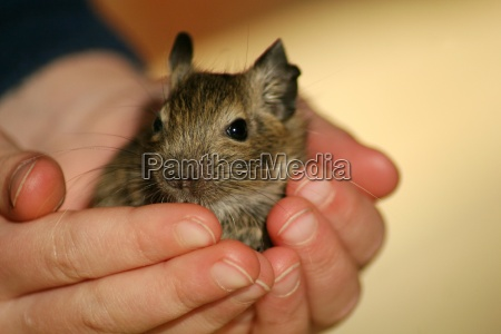 a handful of mouse
