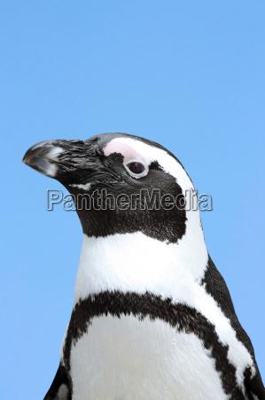 penguin - 1843043