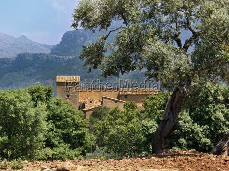 finca in olive grove majorca