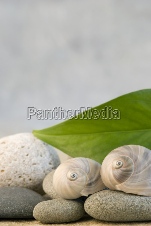 green leaf with pebble and snail