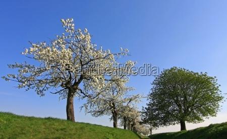 way through the spring