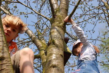 children climbing on tree