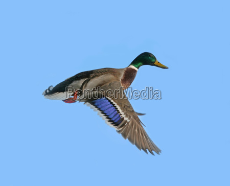flight animal bird birds wing beak