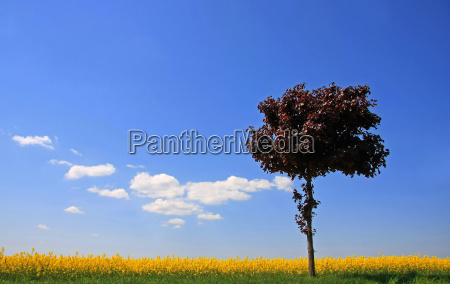 tree bloom blossom flourish flourishing leaves