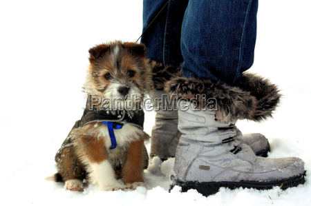 puppy snuggles on boots in the