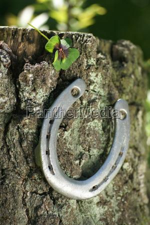 horseshoe on tree with four leaf