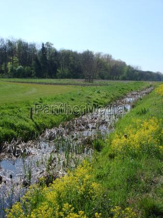 estupro primavera golfe floresta rio agua