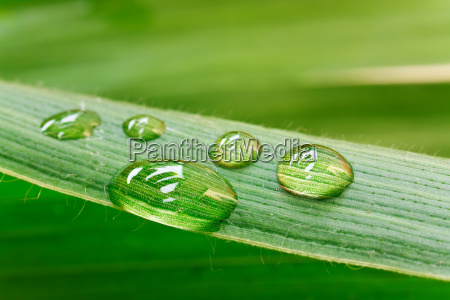 water drops on leaf isolated