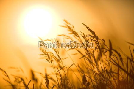 grass in the back light