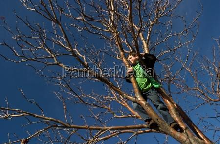 boy standing in tree
