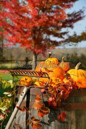 colorful, pumpkins, and, gourds - 2199235