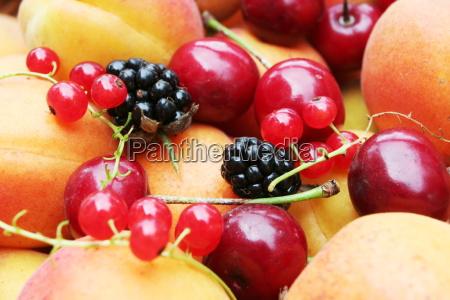 fruit - 2202153