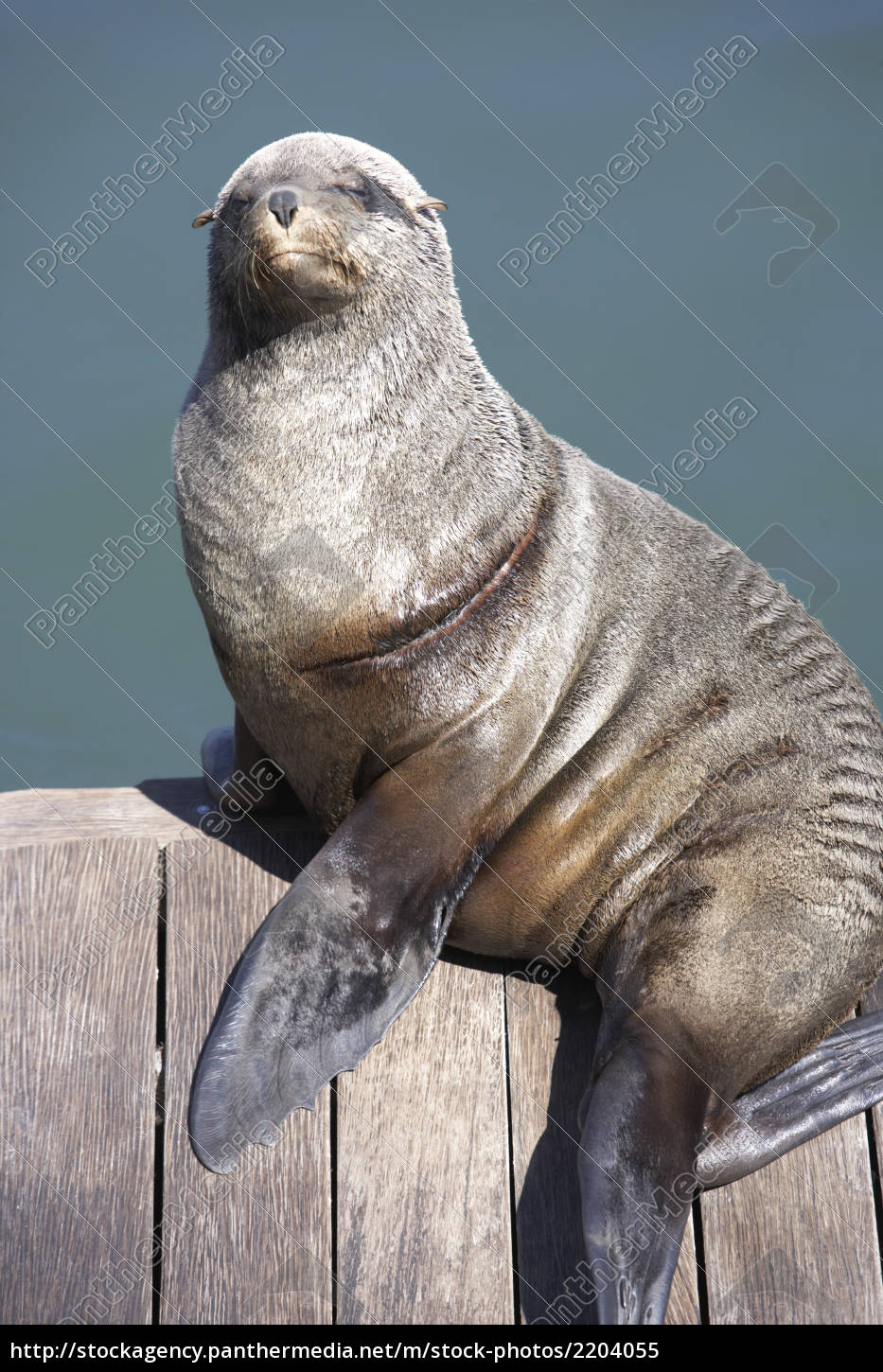 south, africa, cape, town, seal, sitting, on, pier - 2204055