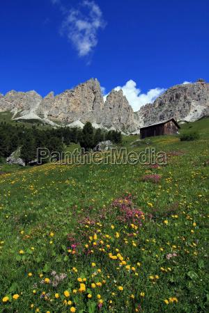 flower meadows on cir