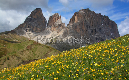 mountains dolomites alps flower flowers plant