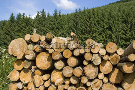 woodpile in the spruce forest