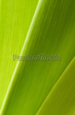 Nature, Close-Up, Background, Flora, Leaves, Plant - 2251331