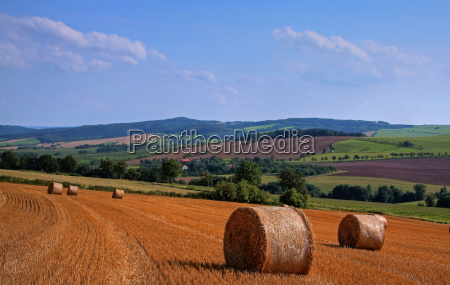 agriculture farming summer summerly straw ball