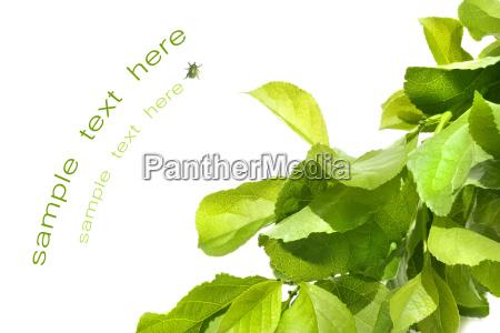 green foliage against white