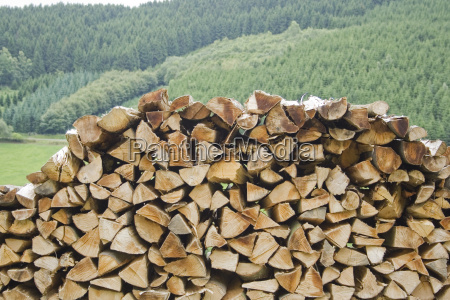 woodpile in spruce forest