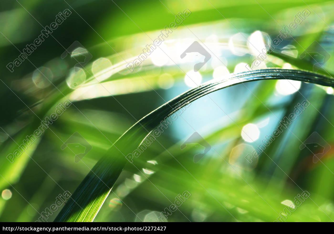 grass - 2272427