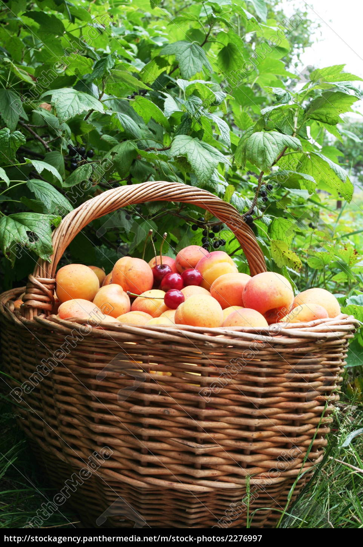 fruit - 2276997