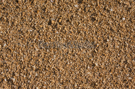 trapical sand and shells background image