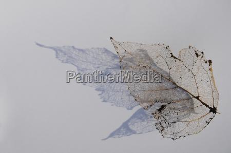 background leaf skeleton