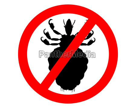 prohibition sign for lice on white